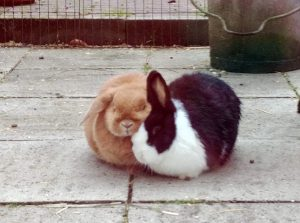 Binky (links) en Jacky, vorige week.